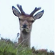 Аватар пользователя Klugtanker