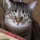 Аватар пользователя CapMor