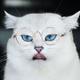 Аватар пользователя Sundeus