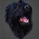 Аватар пользователя brtdog