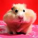 Аватар пользователя Chii1