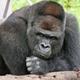 Аватар пользователя zelbu