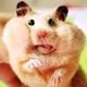 Аватар пользователя hamstars