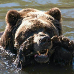Medveditsa