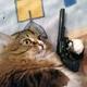 Аватар пользователя qfkt