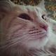 Аватар пользователя Golub69