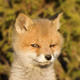 Аватар пользователя Andery