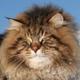 Аватар пользователя Rugodiv