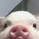Аватар пользователя Jiblo