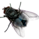 Аватар пользователя Morpheushka