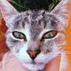 Аватар пользователя W7.Pikabu
