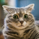 Аватар пользователя ballistix