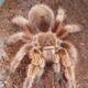 Аватар пользователя Arachnoforbes