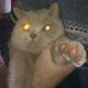 Аватар пользователя Anoniiimus