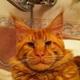 Аватар пользователя puchibaba