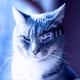 Аватар пользователя Nikalass