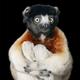 Аватар пользователя mamontenoklesya