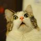 Аватар пользователя SLVV