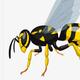 Аватар пользователя LetitBEE