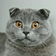 Аватар пользователя enthusasist