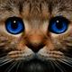 Аватар пользователя Kudripupka