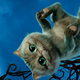 Аватар пользователя Kksesha