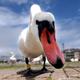 Аватар пользователя Swan40