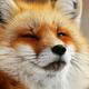 Аватар пользователя elena21103
