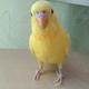 Аватар пользователя vladonck