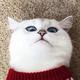 Аватар пользователя Marianna61294