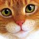 Аватар пользователя ByDeFault