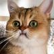 Аватар пользователя Guhring