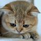 Аватар пользователя Azrik