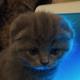 Аватар пользователя Molodoy001