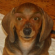 Аватар пользователя dizy73