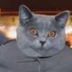 Аватар пользователя Viktorrr100