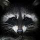 Аватар пользователя Meffistroler