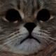 Аватар пользователя Zverob0y
