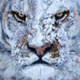 Аватар пользователя DiaMaT
