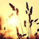 Аватар пользователя avgFactor