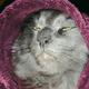 Аватар пользователя Salatqa