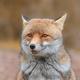 Аватар пользователя Kassis17