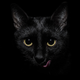 Аватар пользователя cat.lady