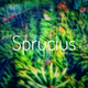 Аватар пользователя Sprucius