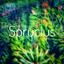 Sprucius