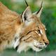 Аватар пользователя LynxLynx7