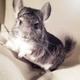Аватар пользователя Chinchillo4ka