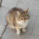 Аватар пользователя BOPOHA666