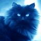 Аватар пользователя PaladinMX