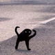 Аватар пользователя Fearchegg